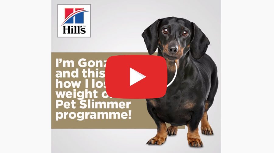 Get Your Pet In Shape With Hill's Pet Weight Loss Programme placeholder image